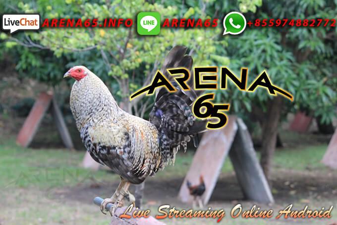Permainan Tarung Ayam Online Uang Asli