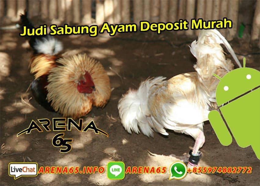 Judi Sabung Ayam Deposit Murah