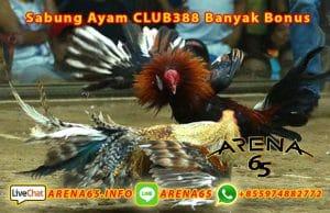 Sabung Ayam CLUB388 Banyak Bonus