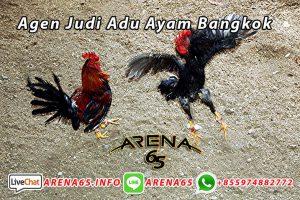 Agen Judi Adu Ayam Bangkok