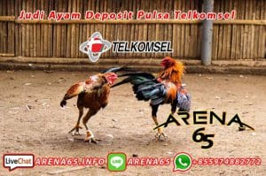 judi ayam deposit pulsa telkomsel